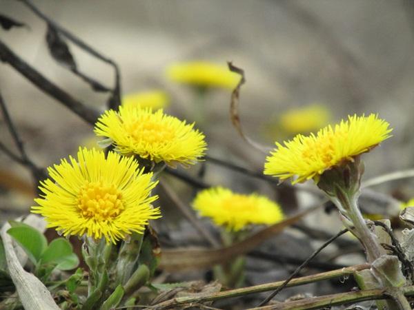 первомайские цветы